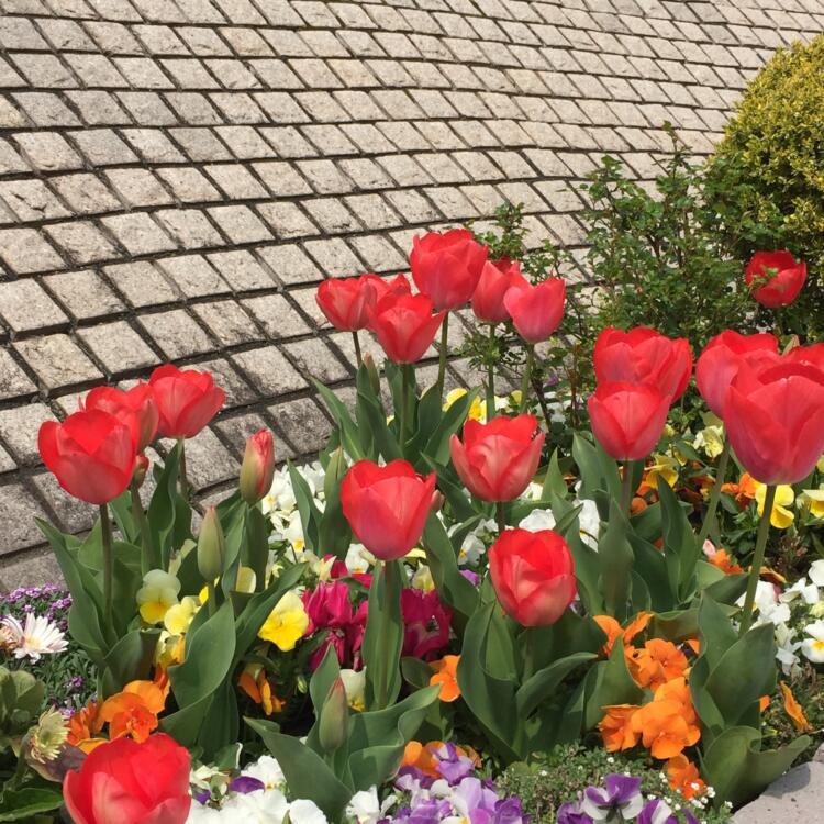 花をつなぎ 心をつなぐ